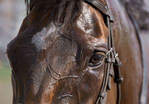 HorseEyews.jpg