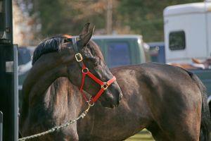 HorseHeadws.jpg