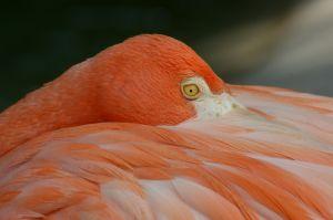 c16-Flamingows.jpg
